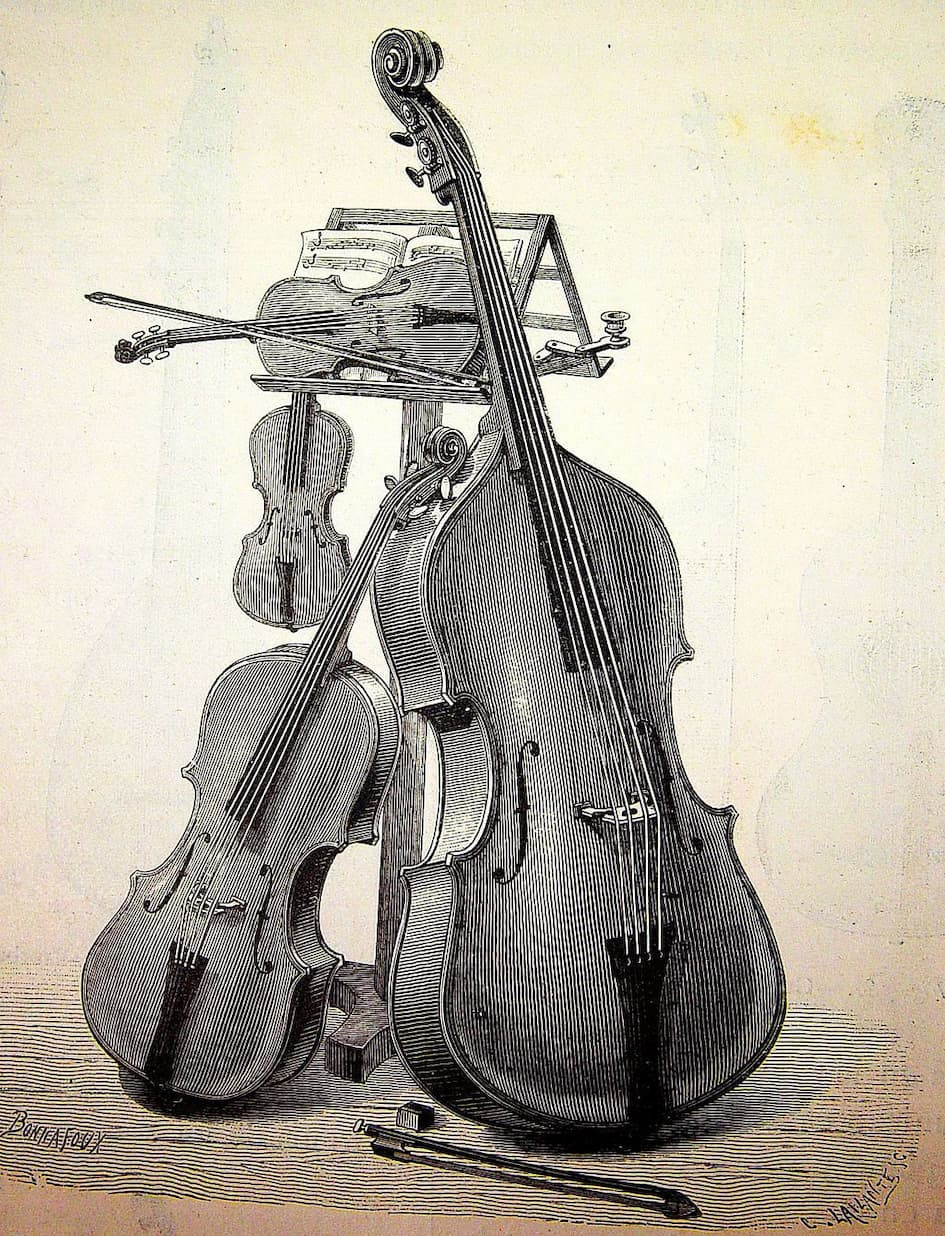 Violin Vs Viola Vs Cello Vs Bass Johnson String Instrument